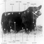 Origins of various cuts of Beef